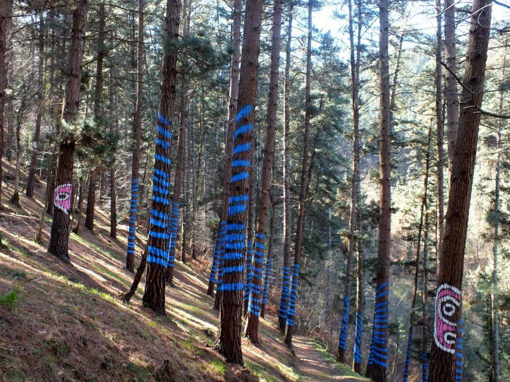 senderismo bosque de oma