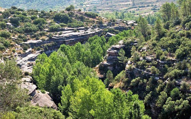La Eurocámara reclama una estrategia forestal que garantice la sostenibilidad de los bosques