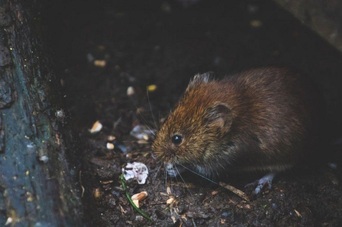 Los ratones en la casa