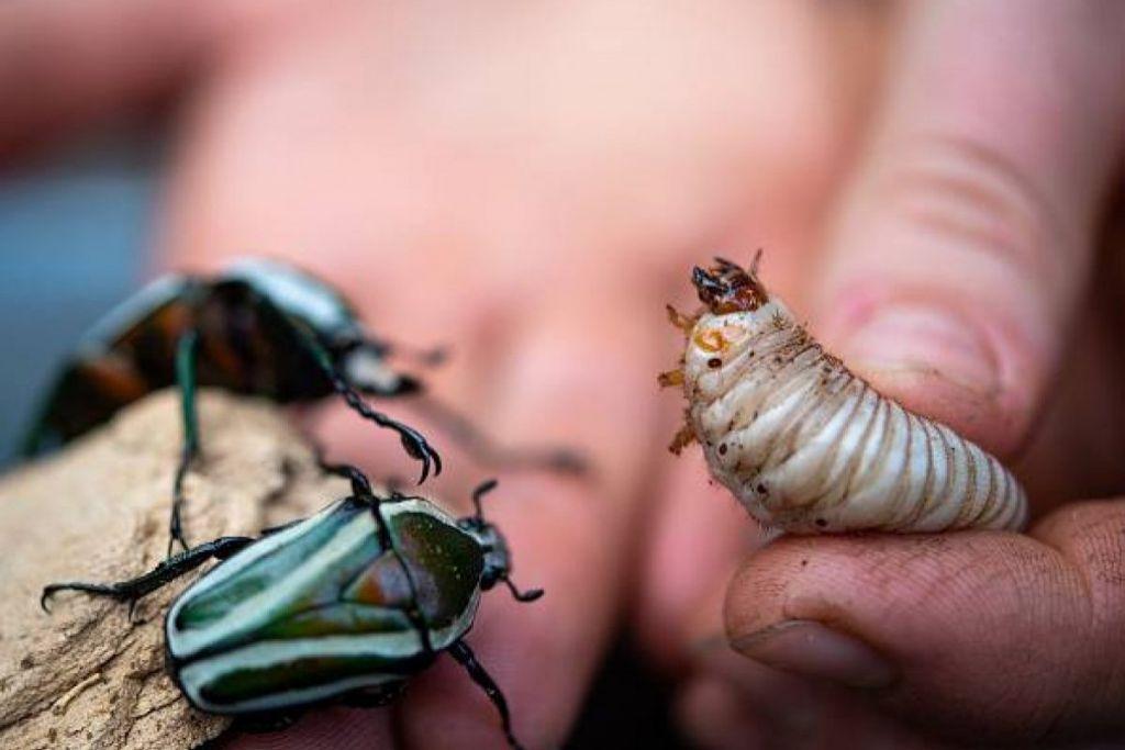 Los insectos mueren hasta ocho veces más rápido que otras especies