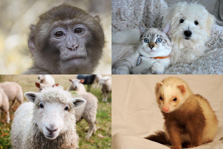 Decenas de mamíferos podrían ser susceptibles al virus COVID-19