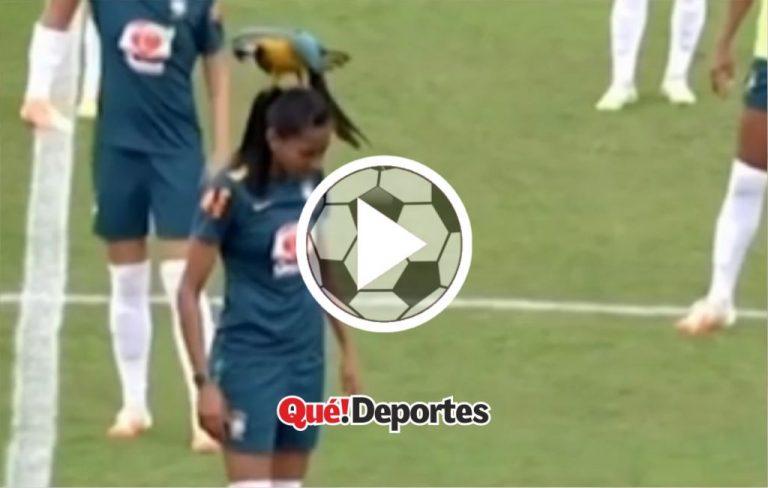 Lo más loco que hoy vas a ver: Loro baila sobre cabeza de futbolista!