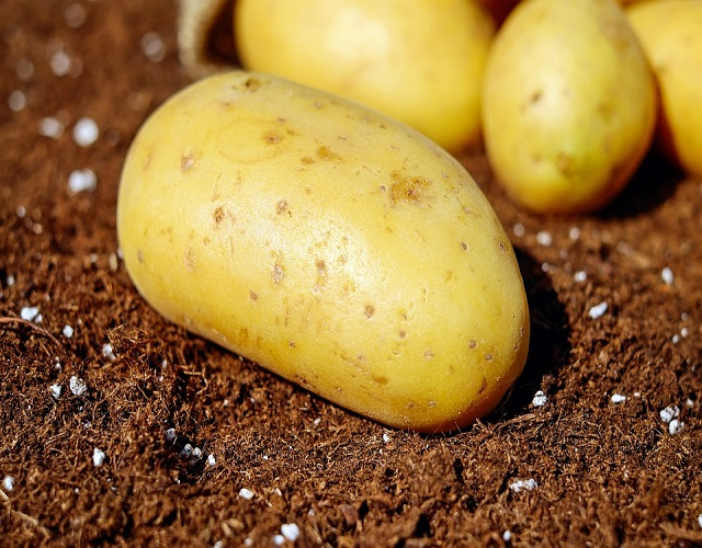 patatas fritas tubérculo