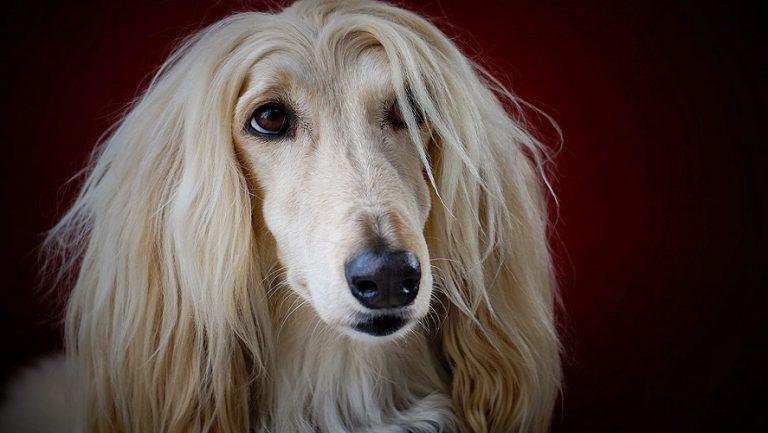 Razas de perros bonitas que seguro encuentras adorables