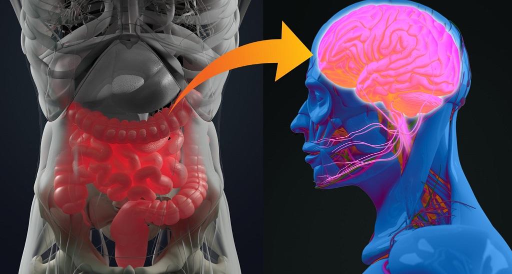 Un estudio confirma la relación entre el Alzheimer y la microbiota intestinal