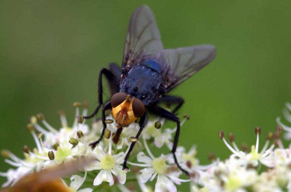 La importancia de las moscas