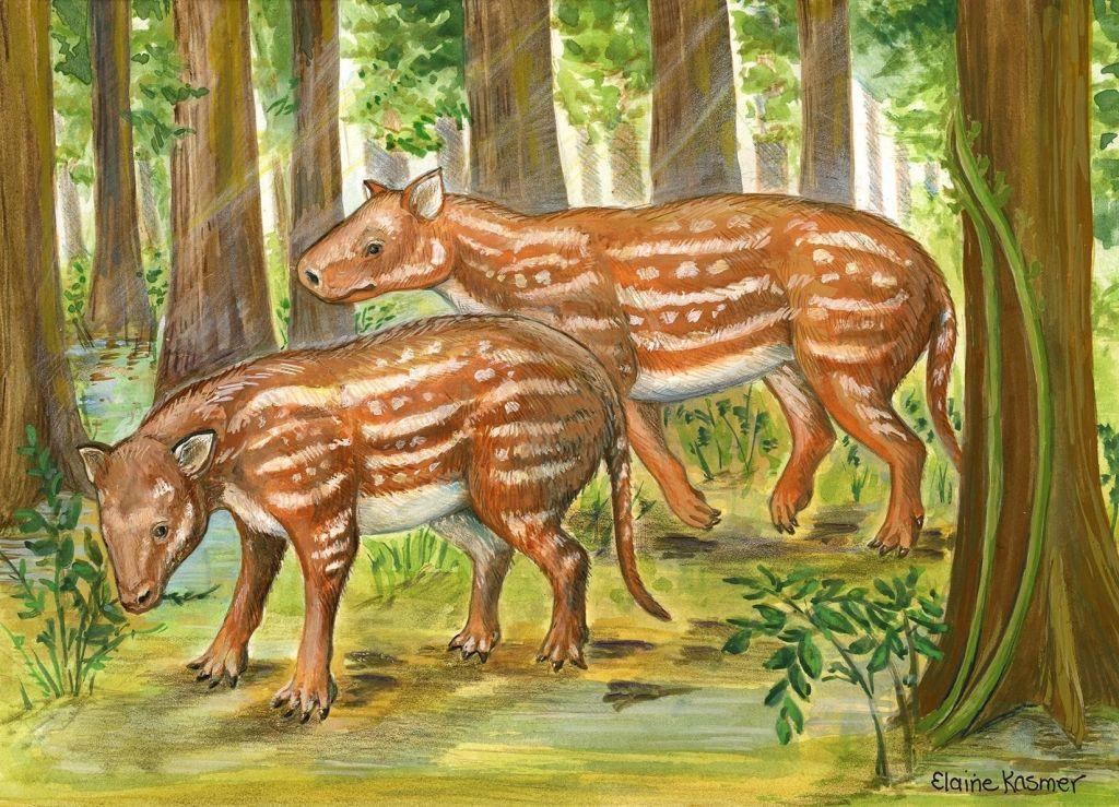 Los fósiles indios apoyan una nueva hipótesis sobre el origen de los mamíferos ungulados