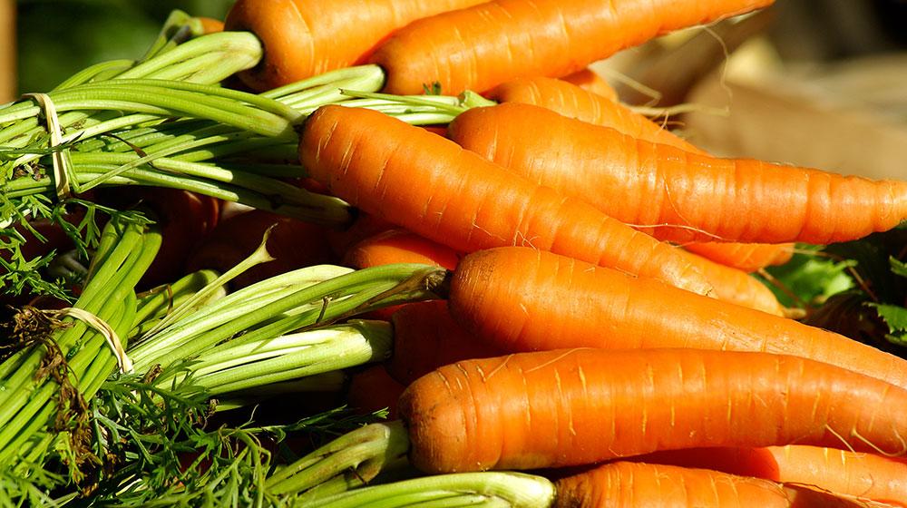 Zanahoria alimentos arrugas