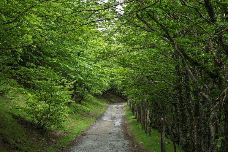 Bosques de España que te enamorarán