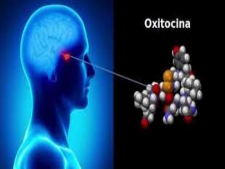Qué es la oxitocina