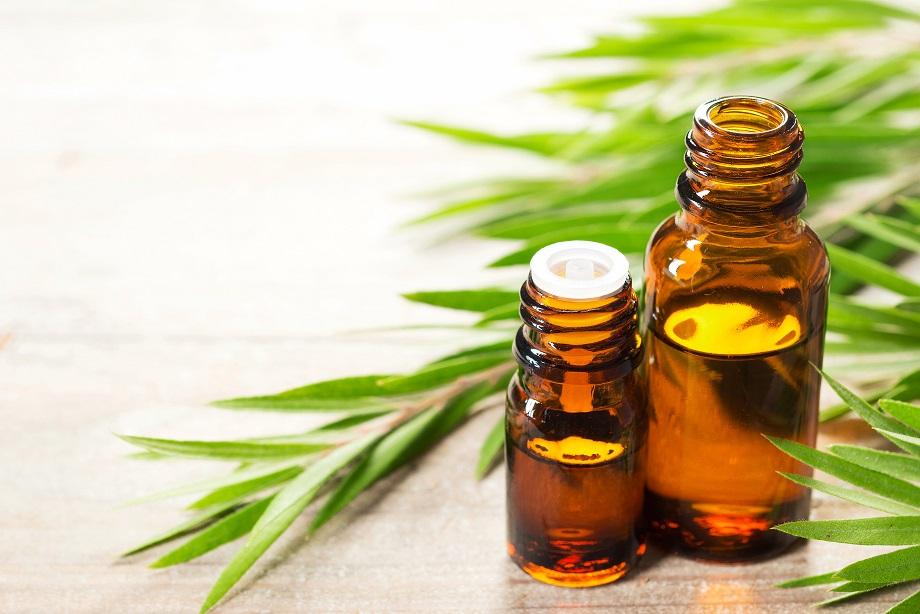 Aceite esencial de árbol de té para hongos