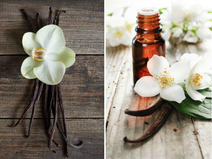 Vainilla combate el olor fuerte de humedad