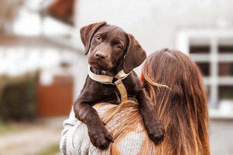 ¡No lo mates! Alimentos que le das a tu perro y lo envenenas