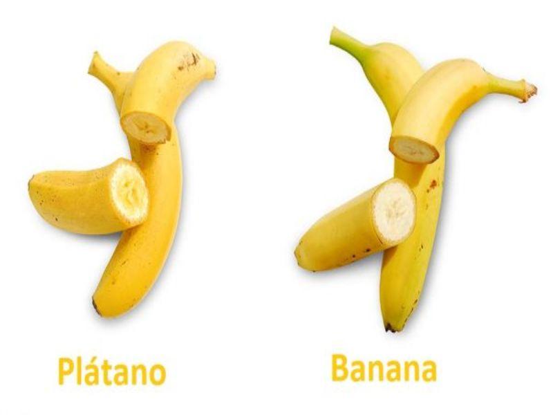 sera lo mismo una banana que un plátano