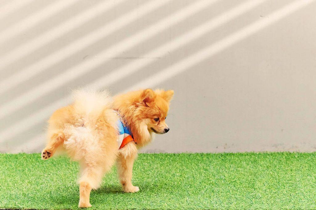 Bañar al perro periódicamente