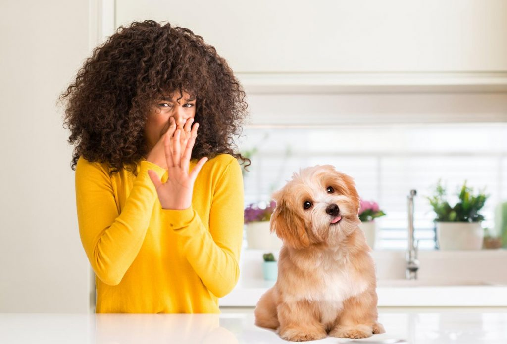 Educar a tu perro para mantener la higiene en tu hogar