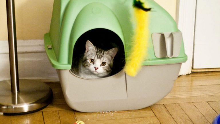 Cómo eliminar el olor a pis de gato