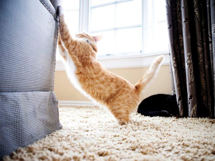 ¿Por qué el gato araña las puertas?