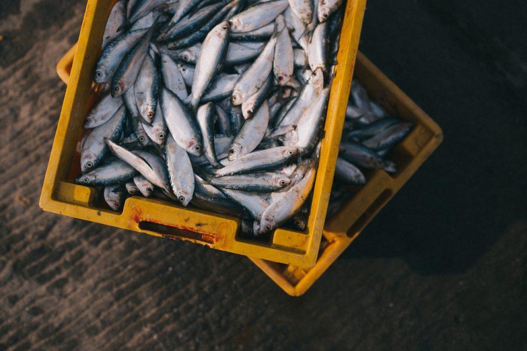 Determinar si el pescado es fresco