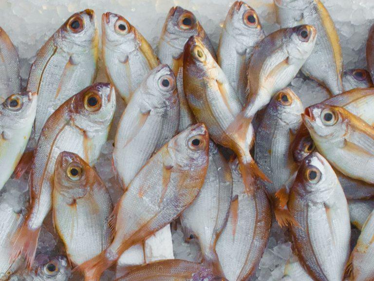 Estos son los pescados de súper con más mercurio