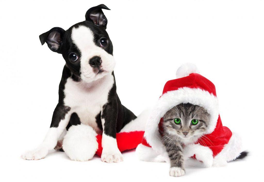 ¿Podrás estropearle la Navidad a este perro y este gato?