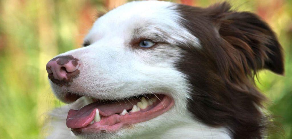 Consejos para evitar el mal aliento en tu perro