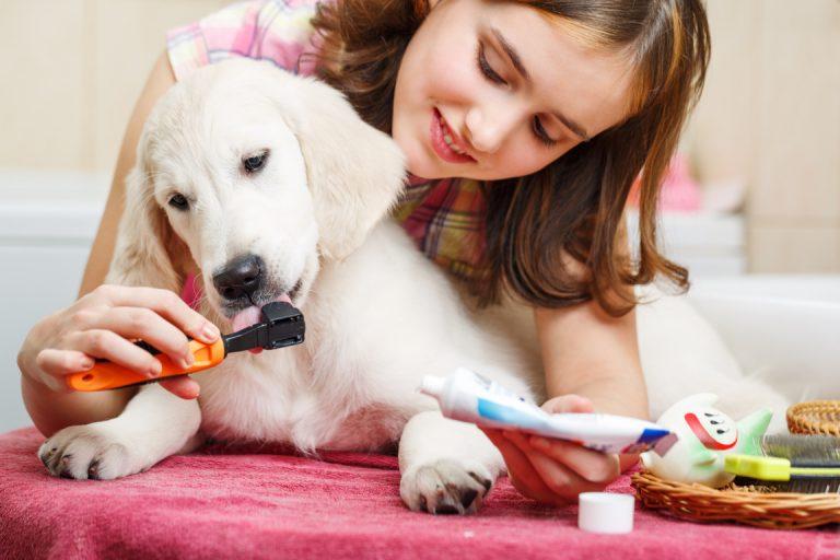 Perro con mal aliento: cómo eliminar el olor a 'tufo' de su boca