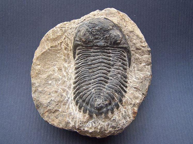 Tipo de fósiles