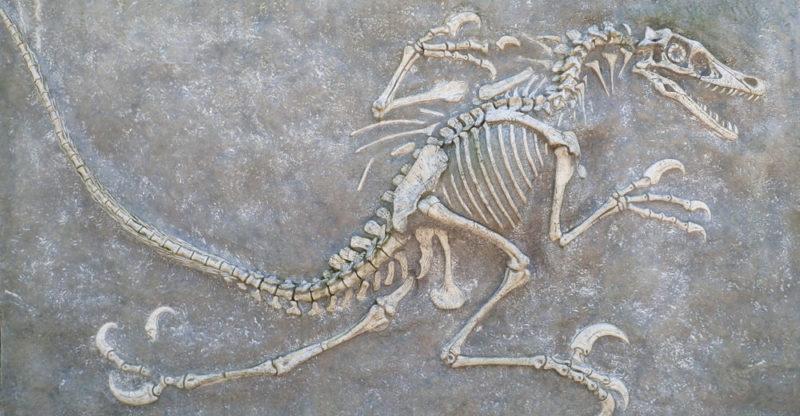 La formación del fósil