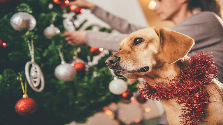 Adornos navideños que podrían matar a tu perro o gato