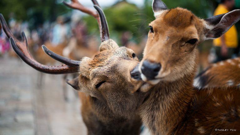 Siete casos que demuestran que los animales también sienten