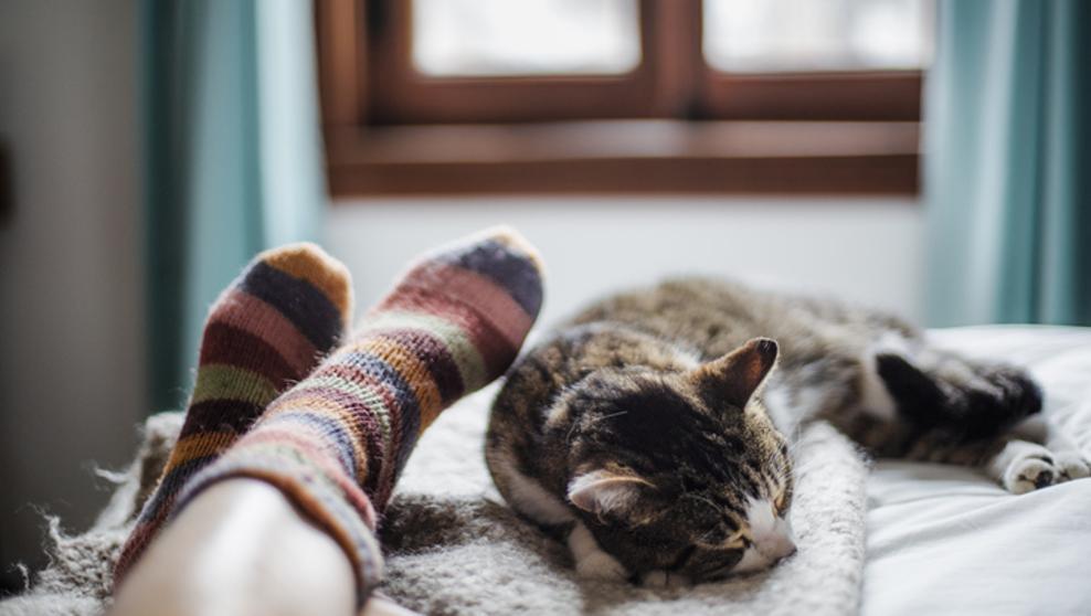 Dormir con nuestro gato y sus beneficios