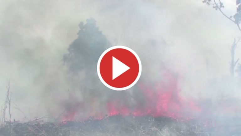 Declarada emergencia ambiental en zona del Delta del Río Paraná de Buenos Aires