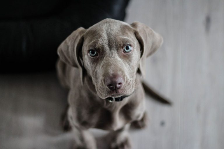 Cómo ayudar a tu perro a que no sufra por los cohetes