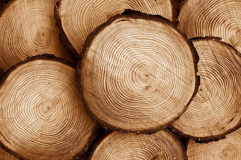 Qué es la madera