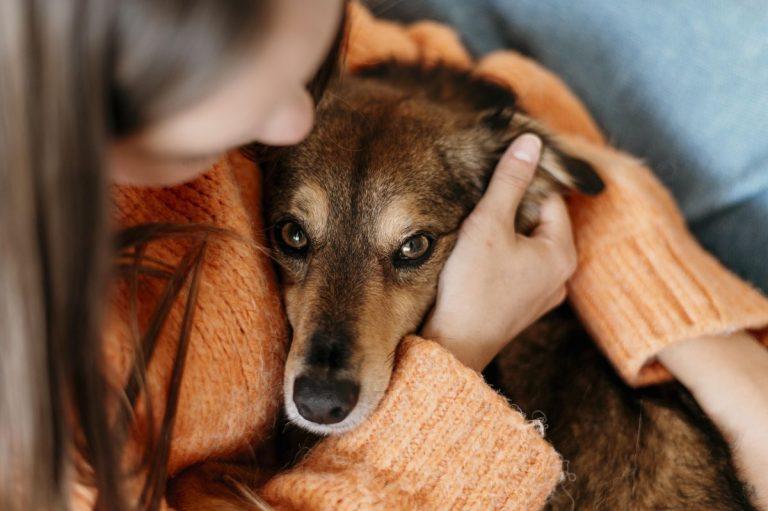 Por qué los perros te entienden menos de lo que crees