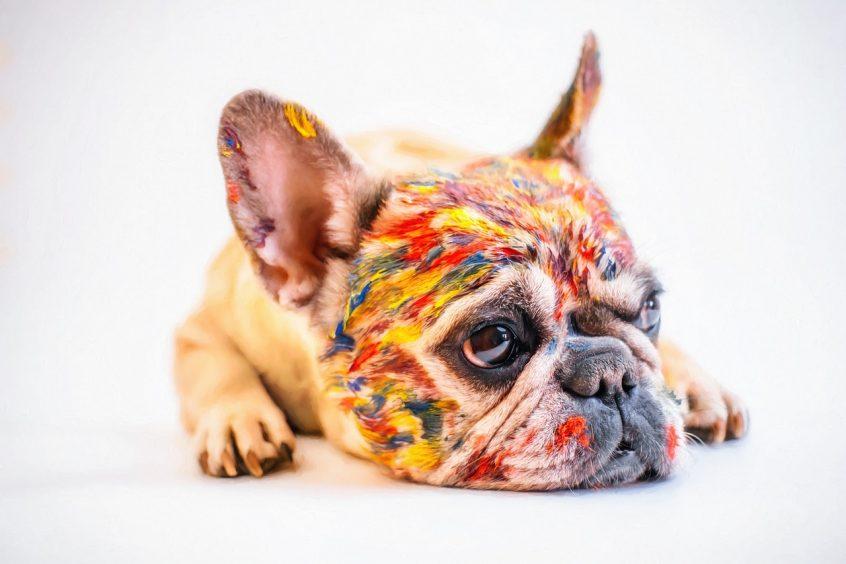 Si tu gato o tu perro se intoxica has de acudir al veterinario por precaución.