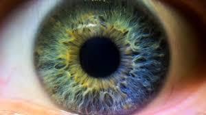 Los ojos grises (o verdes o marrones) son de ese color por la influencia de los melanocitos.