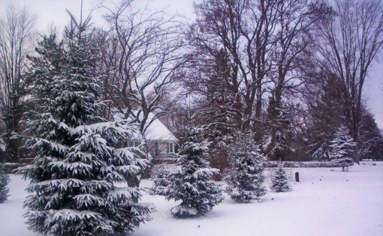 """Por qué se dice """"año de nieves, año de bienes"""""""