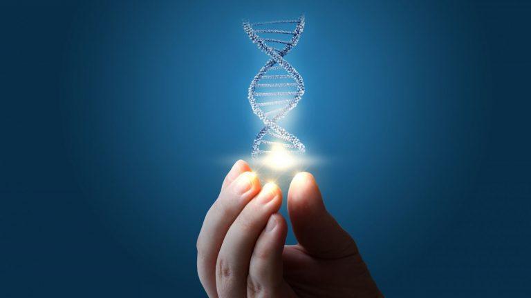 Qué es el genotipo