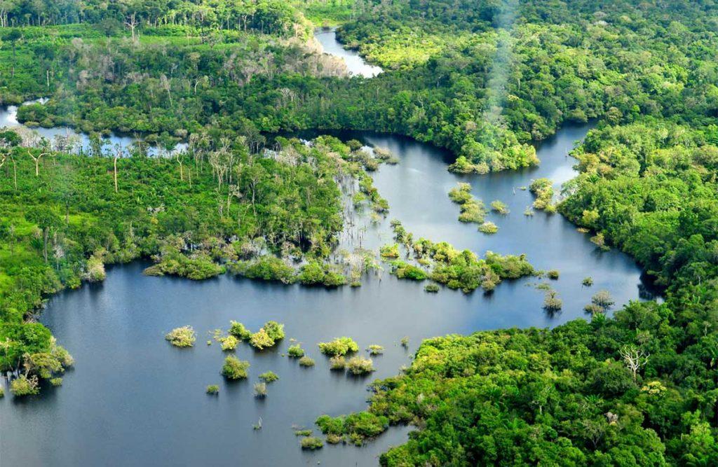 Ecosistema del Amazonas