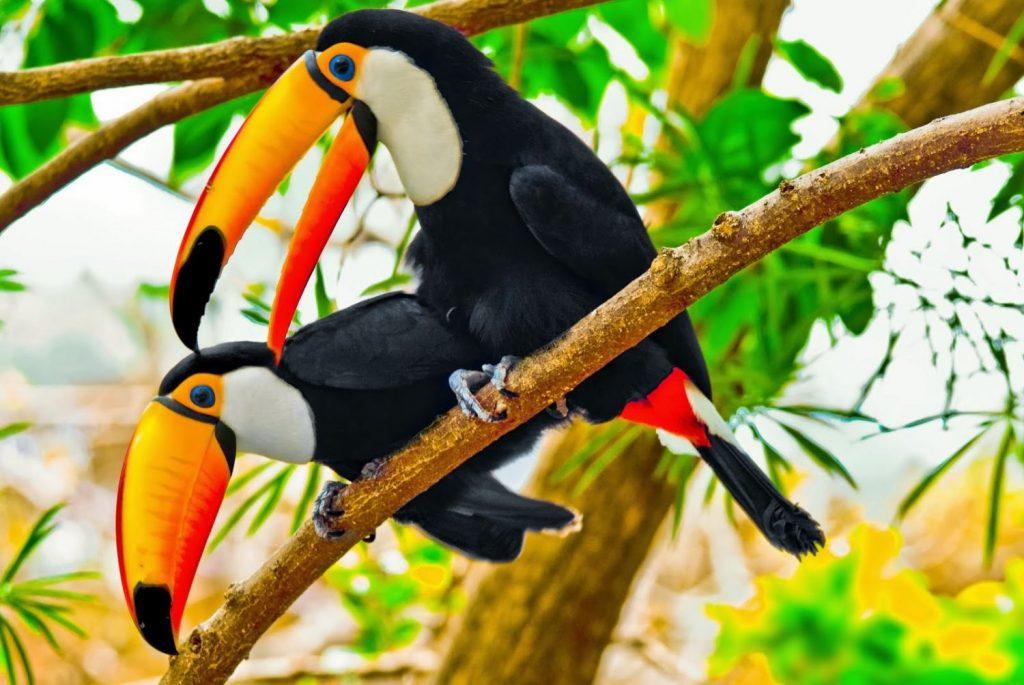 Fauna del Amazonas