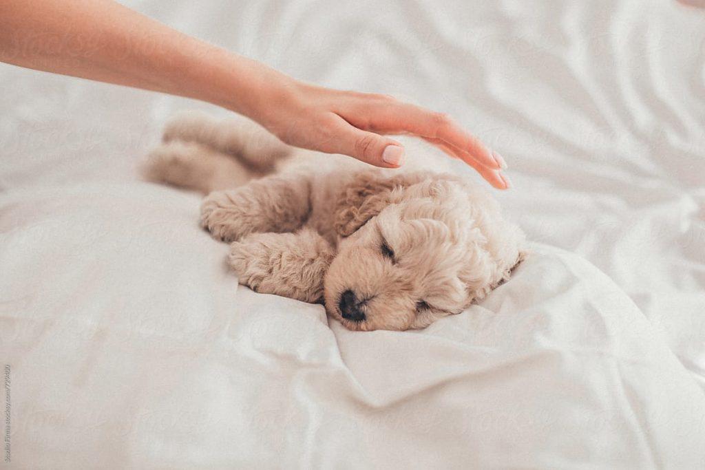Ventajas de practicar petting