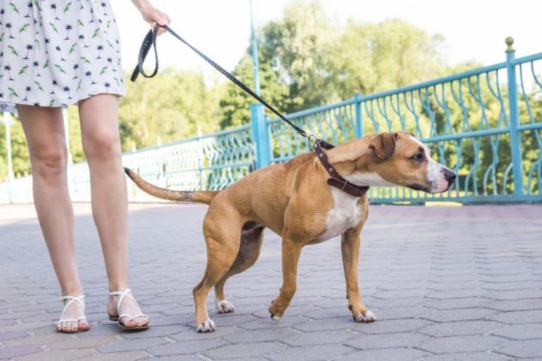 Cómo evitar que tu perro tire de la cadena (y te saque el hombro)