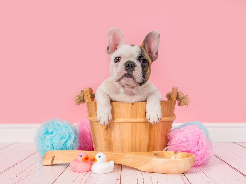 consejos para bañar a un perro