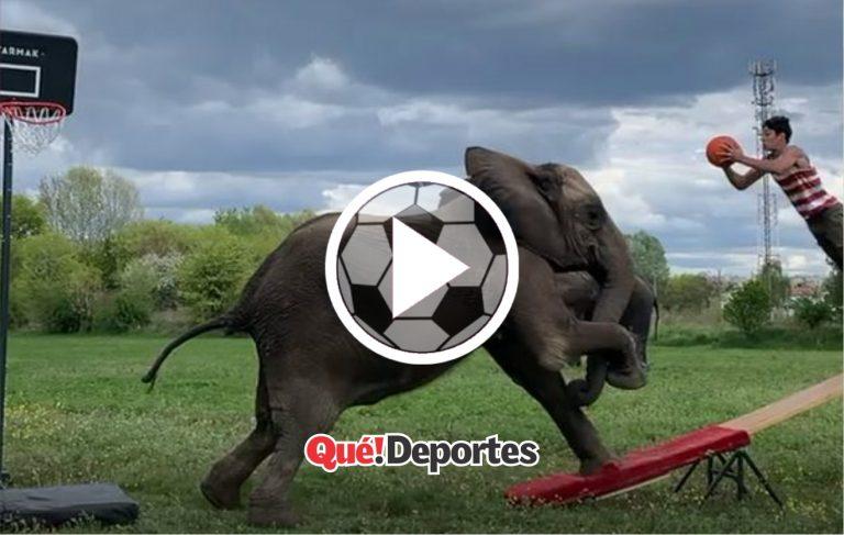 ¡Este elefante es un crack!