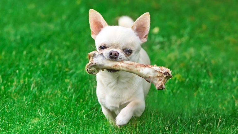 El error más catastrófico que cometes todos los días cuando le das la comida a tu perro