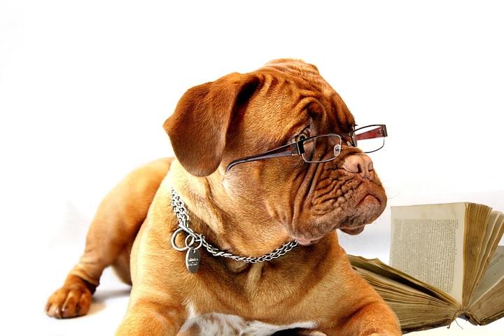 Cómo saber si tu perro tiene un coeficiente intelectual más alto que el tuyo