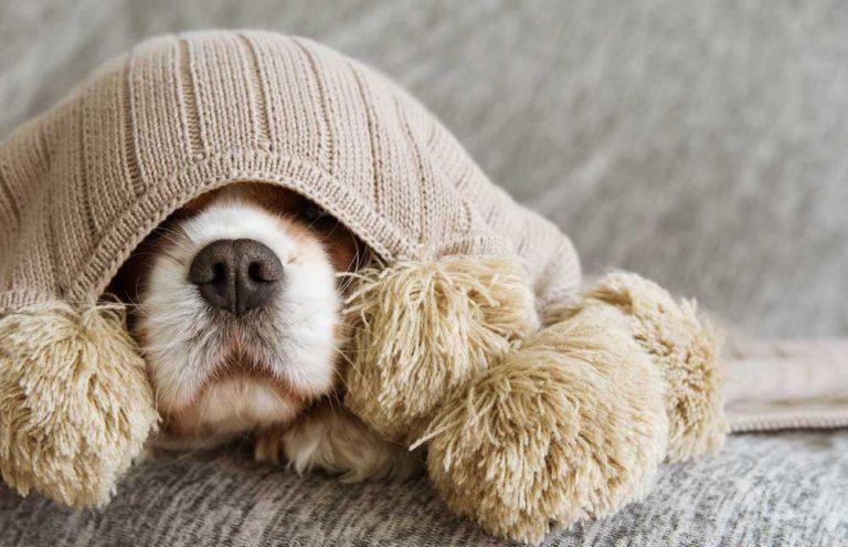 Qué hacer para que tu perro no se 'muera' de frío