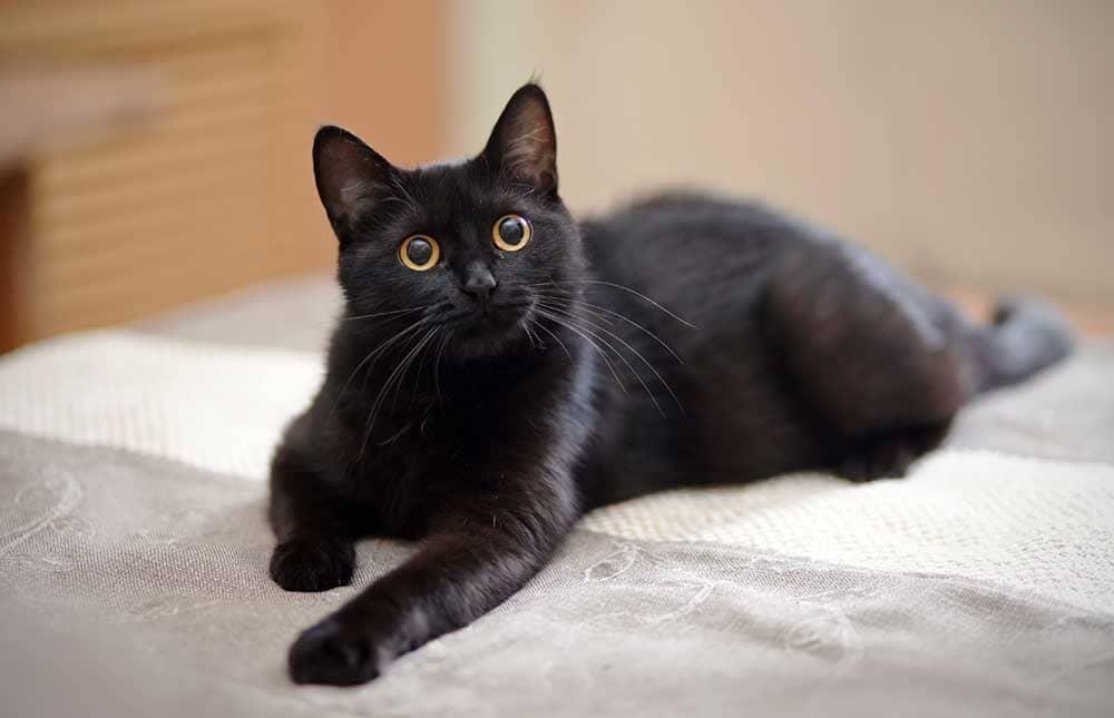 Los gatos como mascota favorita de las personas